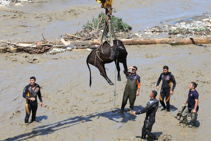 Rescue workers watch during a rescue operation for a cow a day after floods and mudslides killed about three dozens of people